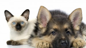 Cat-and-Dog-HD-Wallpapers